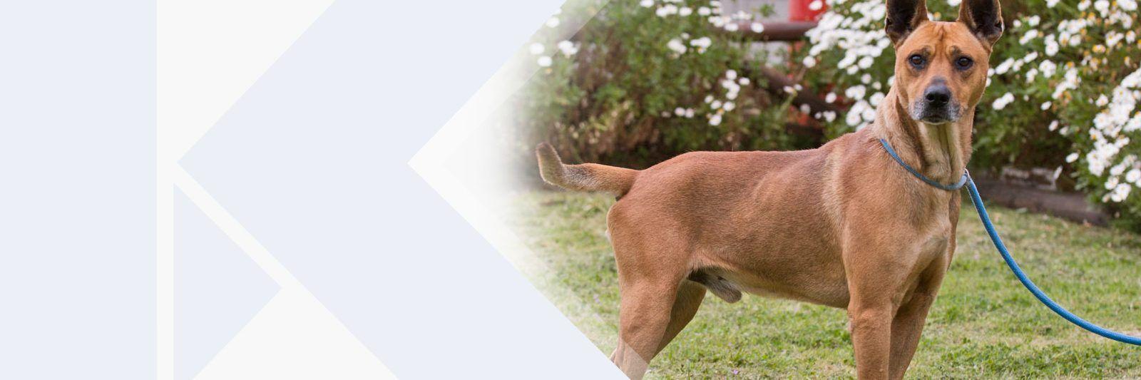 1506426349 27 hond gedagtes marcie